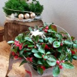 Adventsgesteck - Biancas Blumenstil - Rhön