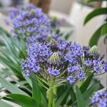 Sommerblumen blau-grün Bianca's Blumenstil