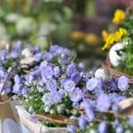 Frühlingsgesteck Violett - Biancas Blumenstil - Gersfeld