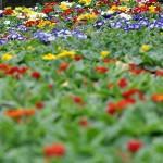 Frühlingsblumen - Biancas Blumenstil - Gersfeld