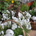 Frühlingsgesteck mit Osterhase - Biancas Blumenstil - Gersfeld