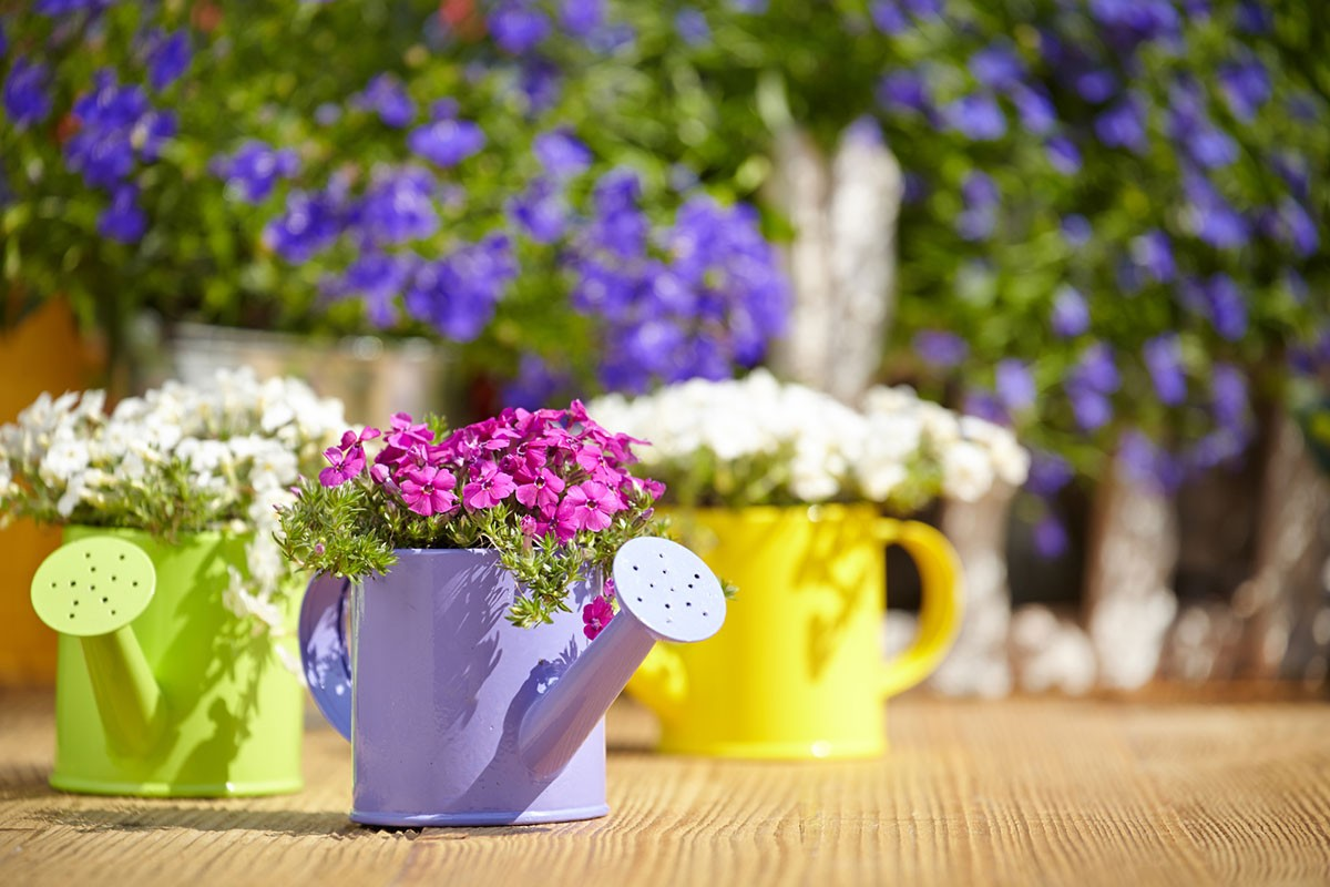 Blumen in bunten Gießkannen - Biancas Blumenstil Rhön