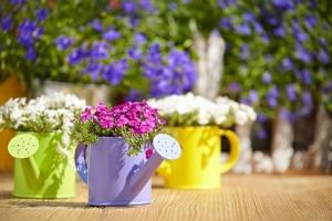 Gießkannen-Bunt-Blumen-Biancas-Blumenstil-Rhoen