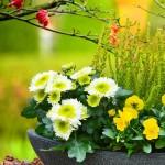 Herbstliche Blumen geschmackvoll arrangiert