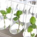 Hydrokulturpflanzen Anzucht Biancas Blumenstil Gersfeld