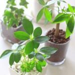Hydrokulturpflanzen Palmen Vase Biancas Blumenstil Gersfeld