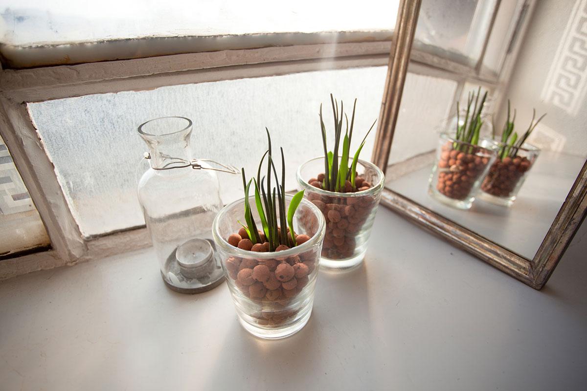besondere pflanzen mit wenig pflege hydrokulturpflanzen. Black Bedroom Furniture Sets. Home Design Ideas