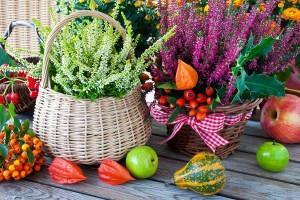 Leuchtender-Herbst-Biancas-Blumenstil-Rhoen